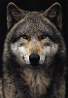 Wolfhiguchi