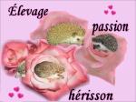 Josée (passionherisson)