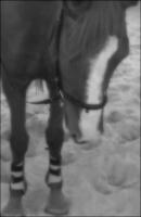 Horse-24