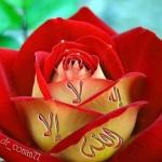 محمد مد