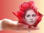 وردة المغرب