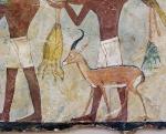 Egyptian Gazelle
