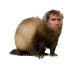 Will Ferret
