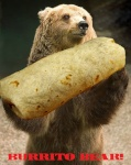 spotted_bear