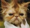 oldtomcat