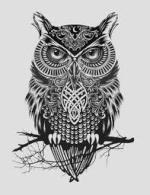 Mr.Owl