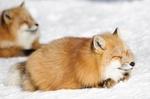 Slot Fox