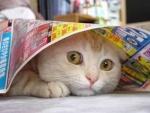 KucingGalak