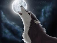Katniss the Werewolf