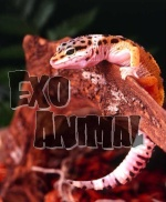 Exo Animal