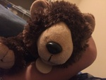 bearkingboy