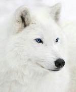 Whitewolf2077