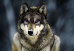PurpleRaven