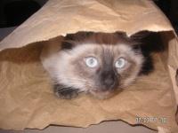 kitty5214