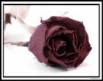 rose.noir