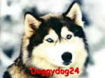 doggydog24