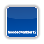 hoodedwarbler12