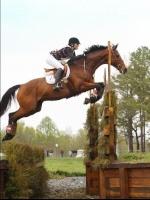 Horseobsser