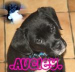 aucley