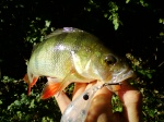 Mystyfish