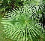 ~Plantes xérophytes~ 459-48