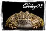 dedey08