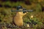 ecureuil de salm