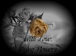 DyingFlowers