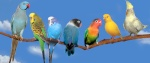 Birdy-Galet