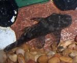 froglady99