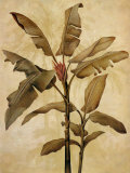 Bambous et graminées 152-22