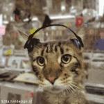 housecat94