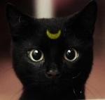 kitty99