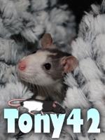 Tony42