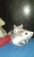 Ratatouille5959
