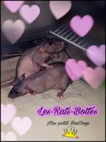 Team-Rat-quette