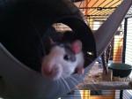 Lau-rat-pas