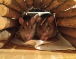 Ratatatouille