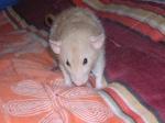 cam&rats