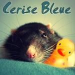 cerise bleue