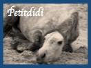 Petitdidi