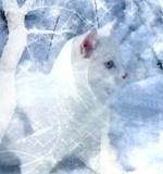 Catssy