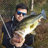 BassFlow33