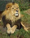De Lion