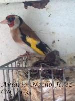 Nacho_Jerez