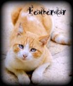Featherstar