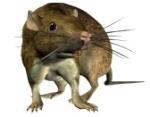 FUN~Ratner