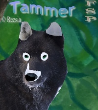 Tammer
