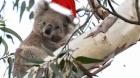 koala_el_koala