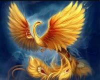 Phoenix95